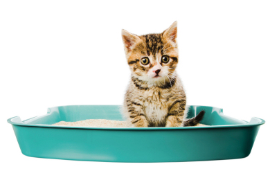 Deodorizing Cat Litter Image