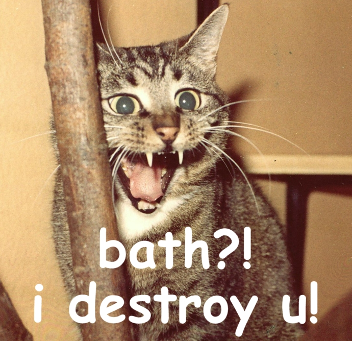 Image of a cat not wanting bath