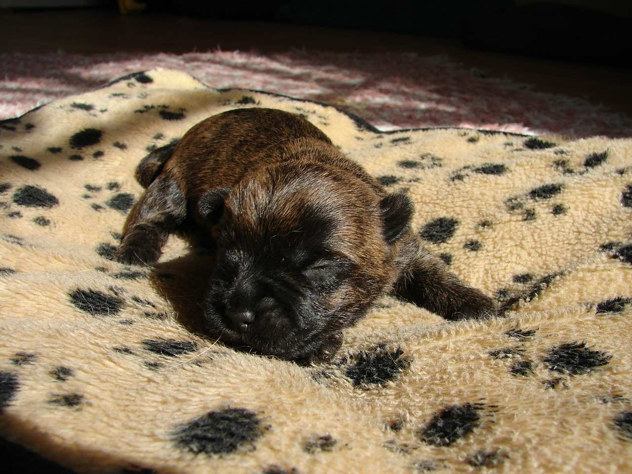 Potty Training Puppies In Winter Nilodor S Blog