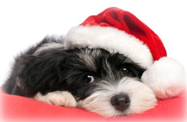 Puppy Santa Image